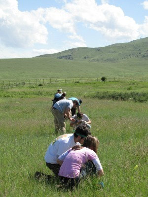 Students collecting data on the National Bison Range